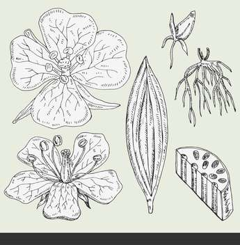 summer flower buds set vector illustration - vector gratuit #135032
