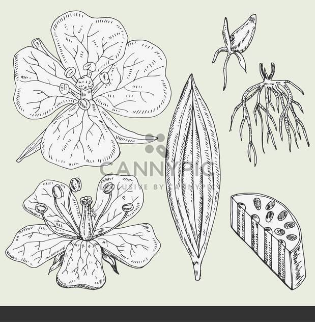 summer flower buds set vector illustration - Free vector #135032