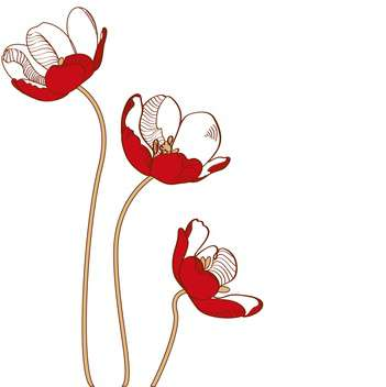 Vector red tulips on white background - Free vector #127272